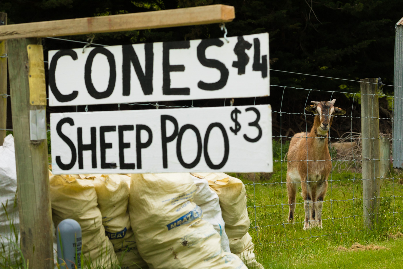One thing about having 30 million sheep? Lot's of sheep poo.